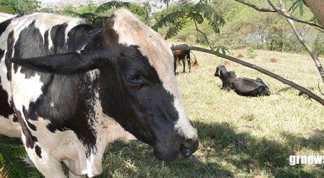 Governo Bolsonaro cria expectativa de melhorias para o agronegócio em 2019, diz produtor rural
