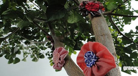 Projeto Uma Flor por mais Amor leva alegria e descontração a Feira do Produtor Familiar