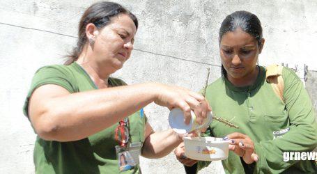 Alerta: índice de infestação do mosquito transmissor da Dengue sobe para 2,4% em Pará de Minas